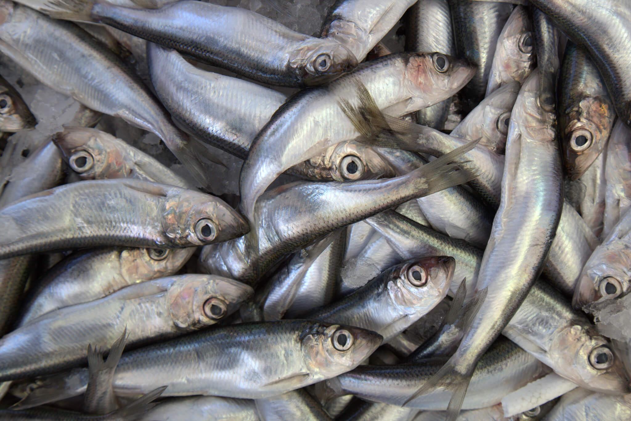 dating enemmän kalaa meressä